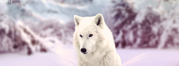 wolf_winter_cover_1